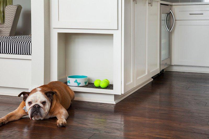 Doorways magazine inspiring home design ideas and for Dog friendly flooring ideas