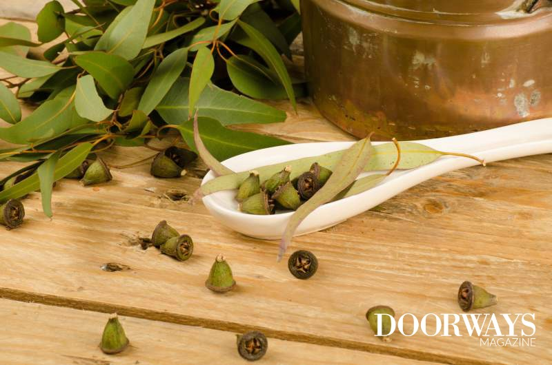 The Surprising Benefits & Uses of Eucalyptus Oil