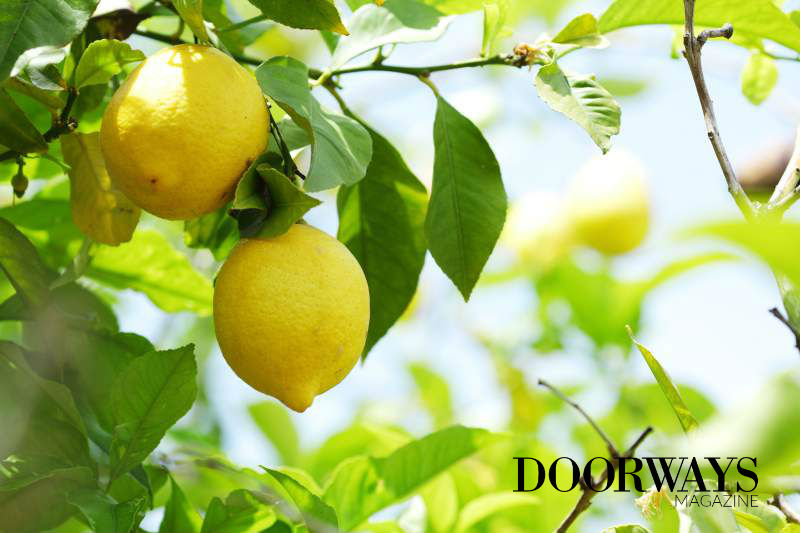 Lemon Essential Oil: Your Secret to Healthy Skin and Hair
