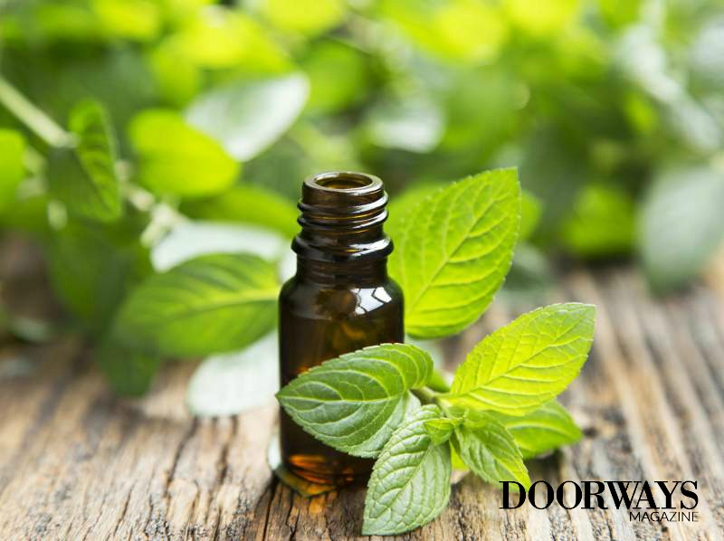 A Guide to Peppermint Essential Oils