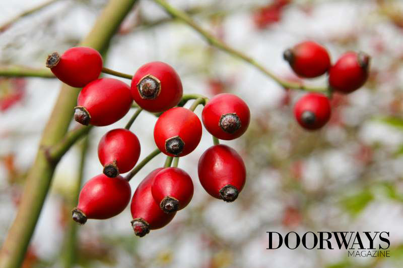 Can Rosehip Seed Oil Make You Look Younger?