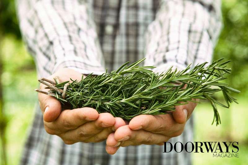5 Popular Health Benefits of Rosemary Oil
